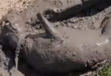 Cãozinho diverte-se à grande a brincar na lama