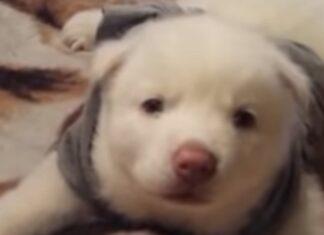 Cachorrinho condenado a eutanásia à nascença deixa todos de queixo caído ao recuperar