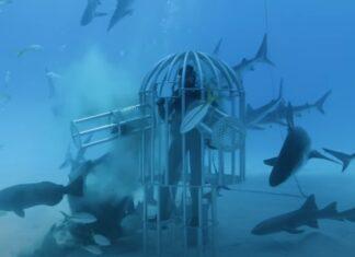 Ex-Engenheiro da Nasa testa se tubarões são mais atraídos por sangue humano ou de peixes