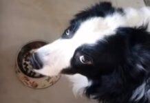 Homem prega partida ao seu cão com comida mas ele não acha piada nenhuma