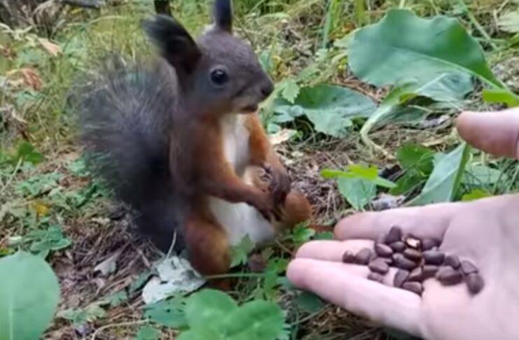 Esquilo faz de estátua quando percebe que estava a ser alimentado por um humano