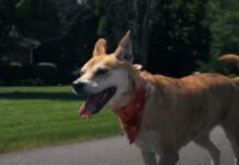 Realizador de Cinema faz curta-metragem sensacional com o seu cão