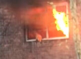 Gato salta da janela de apartamento em chamas para colo de polícias