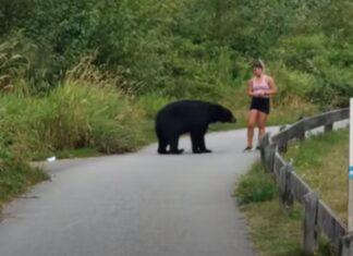 Urso dá palmadinha de motivação a mulher que estava a fazer corrida