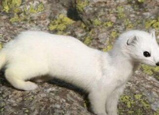 Vídeo mostra alguns dos animais desconhecidos que habitam no Ártico