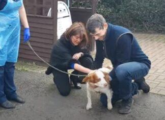 Donos encontram cadelinha 6 anos depois de ter sido roubada