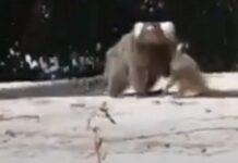 Homem ajuda pequeno macaco-esquilo a reencontrar a mãe