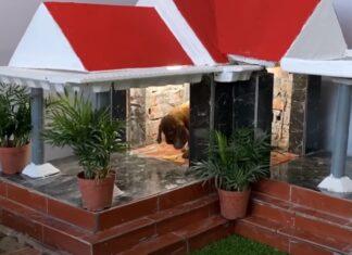 Homem constrói linda mansão para o seu cãozinho