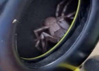Homem descobre aranha gigante escondida nos auscultadores