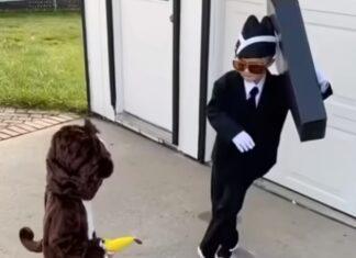 """Menino faz sucesso no Halloween a dançar vestido de """"dança do caixão"""""""