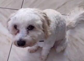 Mulher perde auriculares e começa a ouvir música da barriga do seu cão