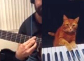 Homem e gato fazem um dueto e derretem corações de internautas