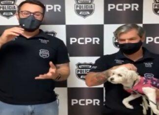 Homem é preso depois de ter abandonado cadela na rua