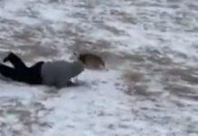 Cão arrasta dono pelo parque de tão contente em ver neve