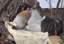 Gato ajuda e está sempre ao lado de gatinha de rua com deficiência