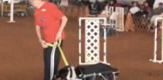 Cadela campeã de agility dá a volta por cima e retorna depois de atropelamento