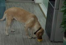 Cão tira gelado do frigorífico e deita caixa no lixo para não deixar rasto