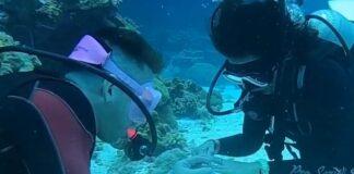 Mergulhador pede namorada em casamento debaixo de água