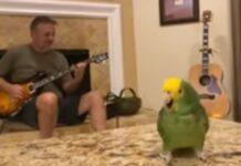 Papagaio é o melhor vocalista para uma banda de rock