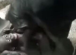 Avó chimpanzé brinca com a sua neta e derrete corações