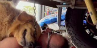 Cãozinho abraça dono e não o deixa fazer trabalhos de mecânica