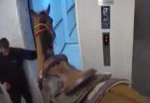 Homens foram presos depois de tentarem entrar com cavalo no elevador