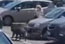 Javalis assaltam mulher à saída de supermercado