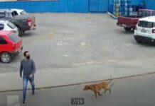 Homem é atropelado por um cão que seguia a grande velocidade
