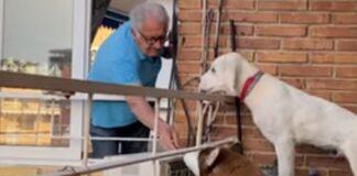 Idoso faz bela amizade com vizinhos de 4 patas
