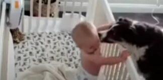Cadela acalma bebé com mimos quando chora
