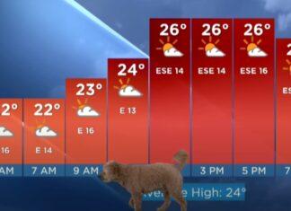 Cão invade direto durante apresentação de meteorologia